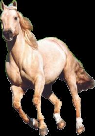 Bekpınar at çiftliği çitleri ve at çiftliği bariyerlerini sizin vereceğiniz özel ölçülere göre, sağlıklı, esnek, dayanıklı, güvenli malzeme kullanılarak üretmektedir.